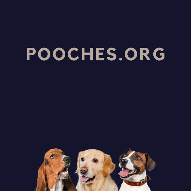 Pooches.org domain name for sale
